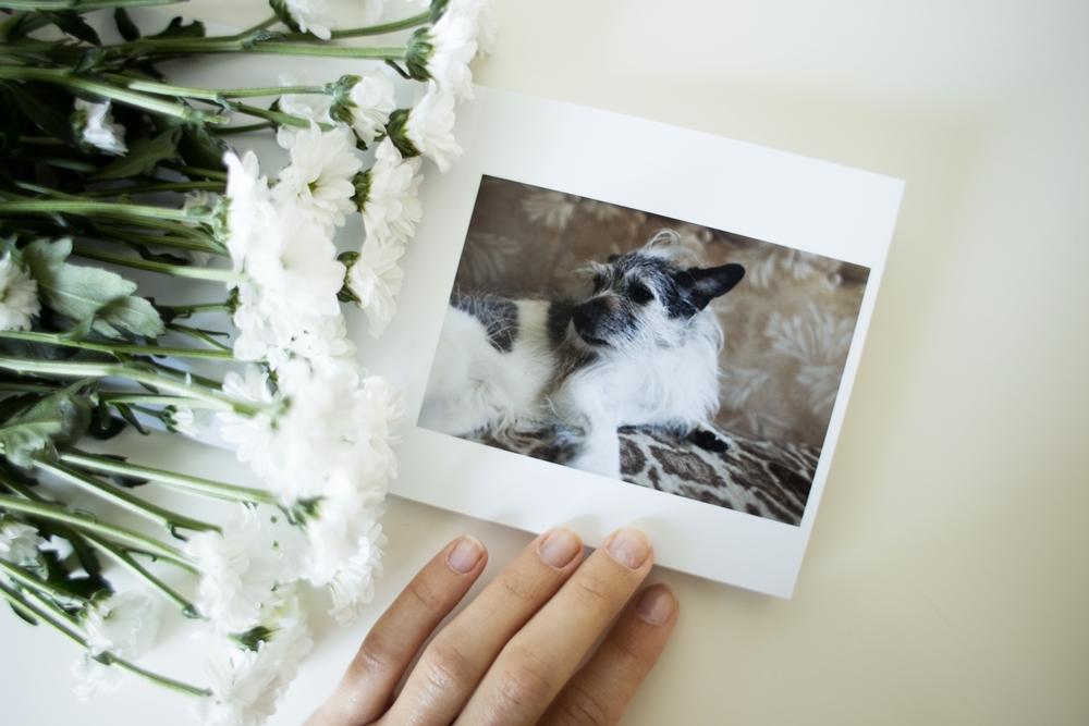 TADEUSZ- samotny człowiek i pies